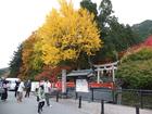 R01総会 出石城跡前の紅葉